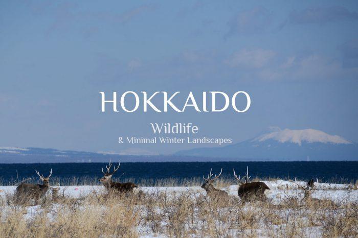 "Photo Tour Japan Winter 2021: HOKKAIDO ""Wildlife & Landscape"""