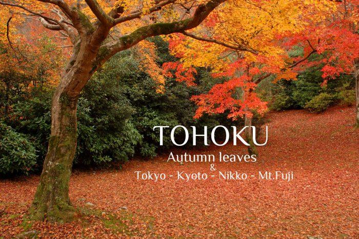 "Photo Tour to Tohoku, 2020 ""Autumn Leaves & Kyoto, Tokyo, Nikko, Mt. Fuji"""