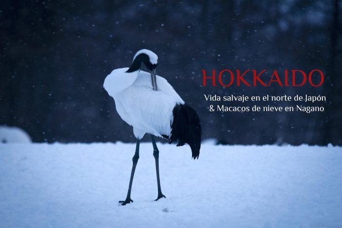 Viaje Fotográfico a Japón Invierno 2022: HOKKAIDO «Vida salvaje en Hokkaido & Macacos de nieve en Nagano»