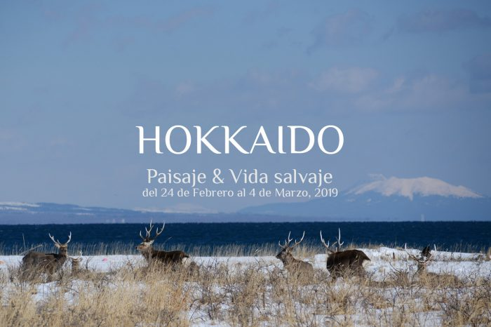"""Viaje Fotográfico a Japón Invierno 2019: HOKKAIDO """"Paisaje & Vida Salvaje"""""""