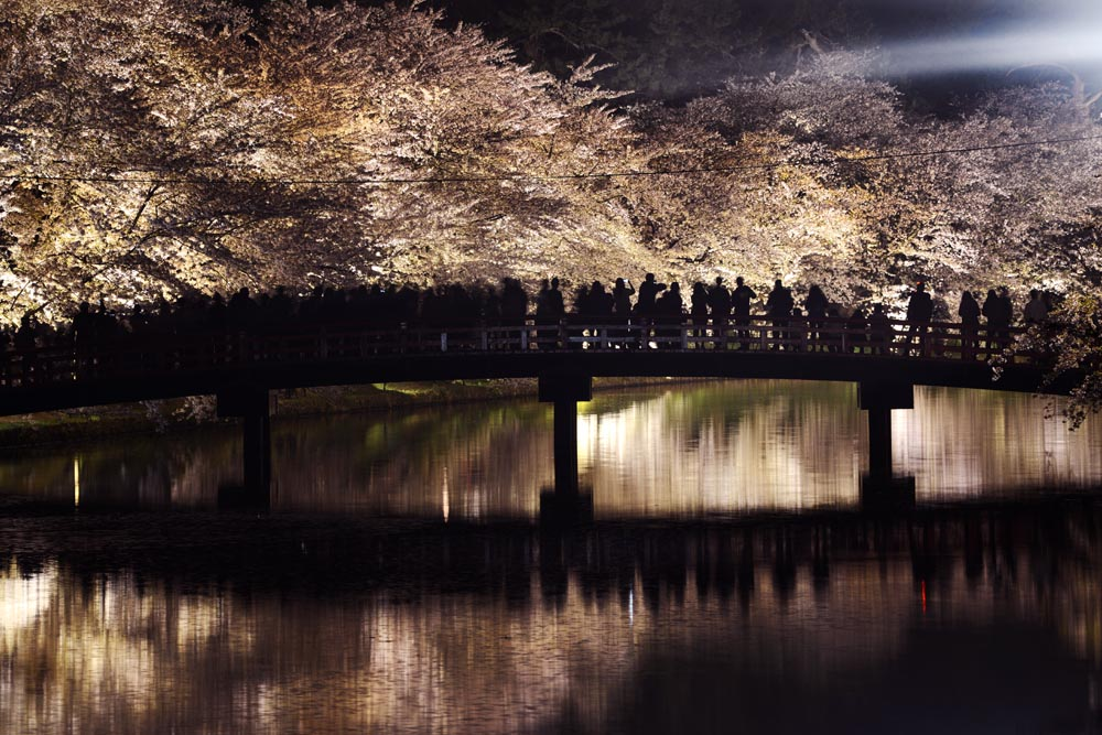 Illuminated cherry blossoms with a pond over the inner moat of Hirosaki Castle ©Akashi Photos