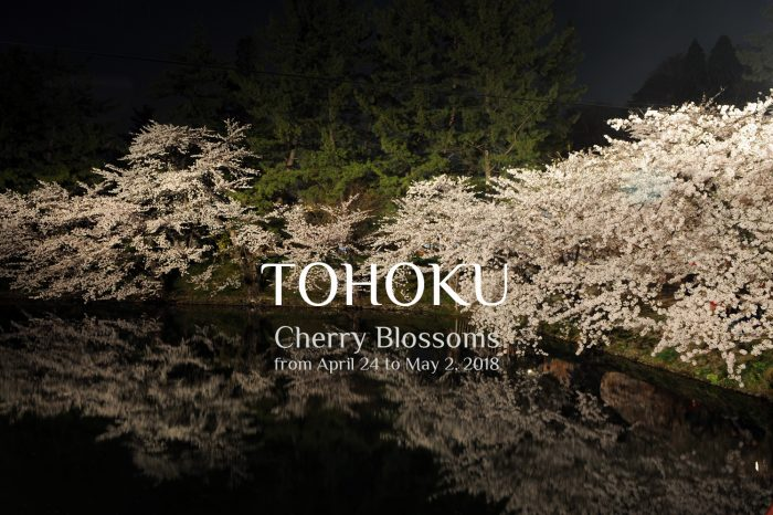 Tohoku – Cherry Blossoms