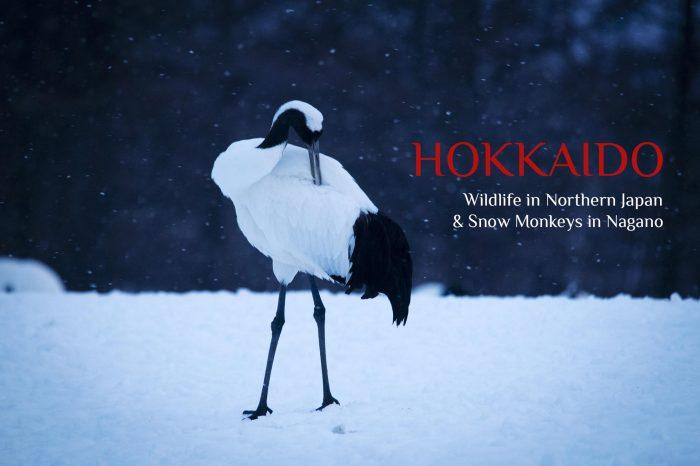 Viaje Fotográfico a Japón Invierno 2021: HOKKAIDO «Viada Salvaje & Paisaje»