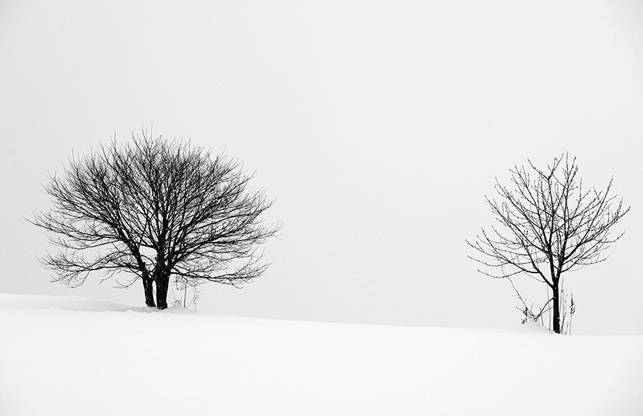 Hokkaido Private Photo Tour
