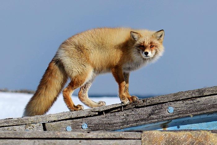 Akashi Travel organizes wildlife photo tours