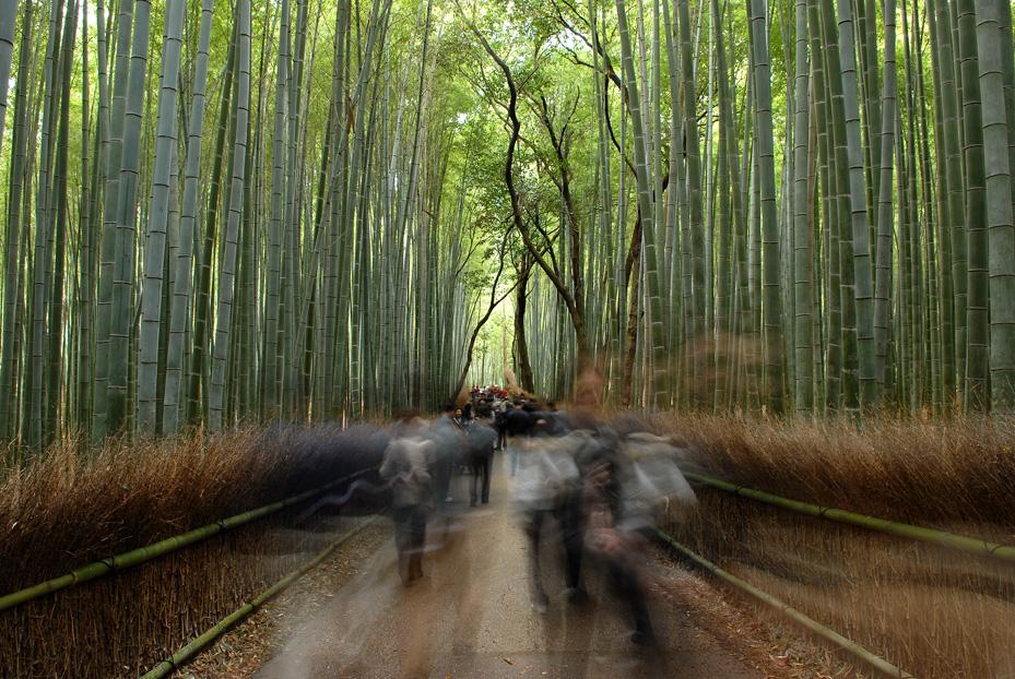 Bamboo forest in Arashiyama, Kyoto.