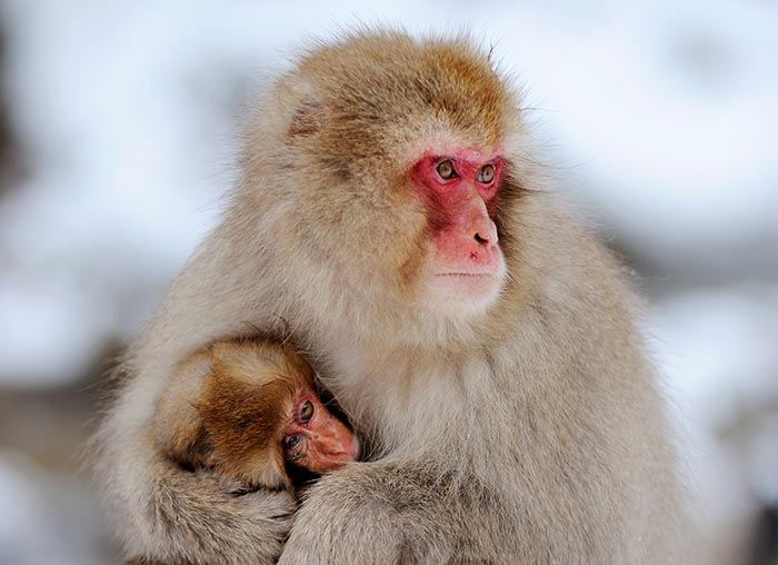snow monkey photo tour