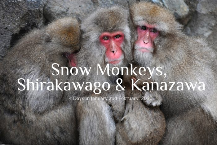 "Photo Tour Japan Winter 2020: ""Snow Monkeys, Shirakawago & Kanazawa"""