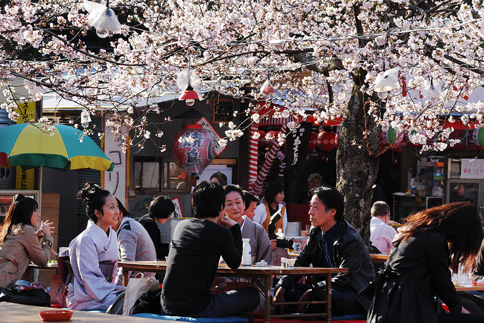 Japanese people enjoying cherry blossom near Yasaka Jinja