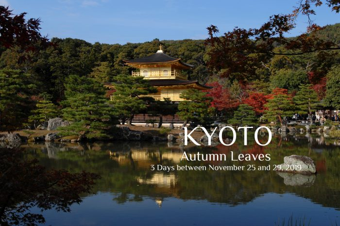 "Photo Tour to Kyoto, Japan. 2019 ""Autumn Leaves"" 3 Days"