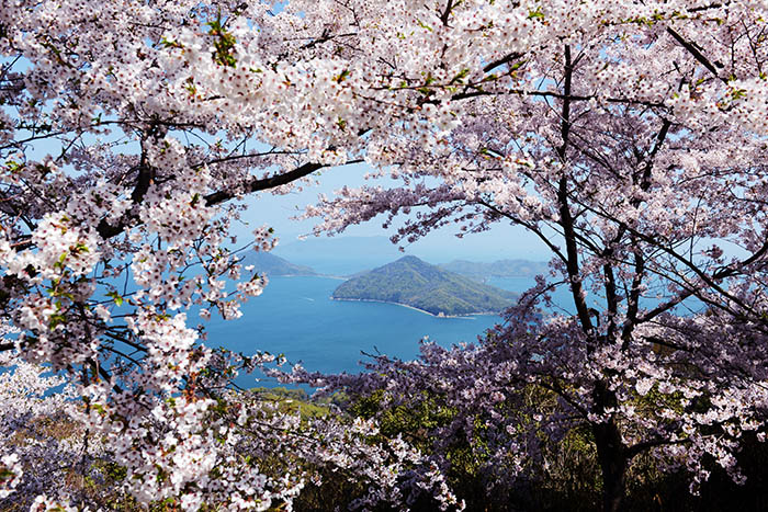 Kyoto & Setouchi Cherry Blossom Photo Tour 2019