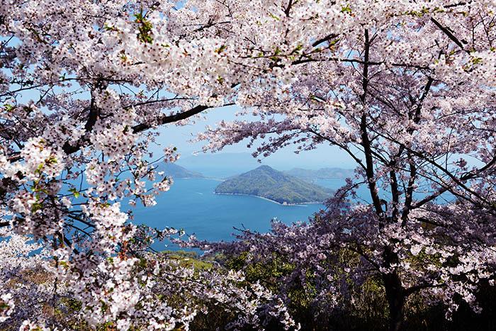 Cherry blossom in Shikoku, Japan